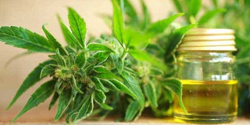 Which is the best CBD or THC?